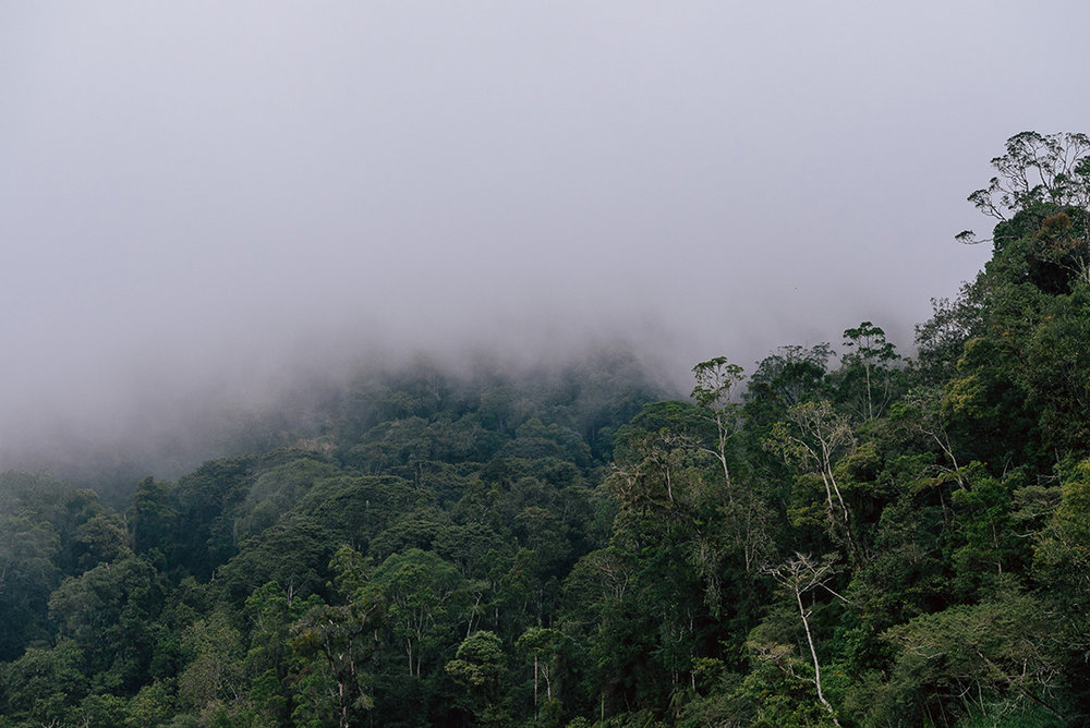 Papua New Guinea 2018-12.jpg