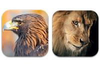 lioneagleblogpost