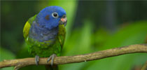 amazing_parrots_wallpapers_post
