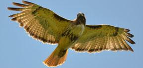 birdSearchPost