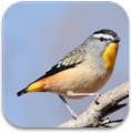 australian_birds_sounds_icon