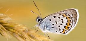 butterfliesLWPBlogPost