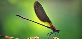 dragonfliesblogpost
