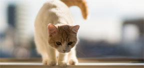 CuteCatsLiveWallpaperBlogPost