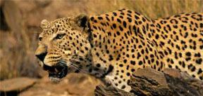 safariAnimalSoundsBlogPost