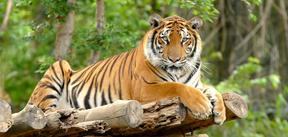 wildcatsandchecklistappBlogPost