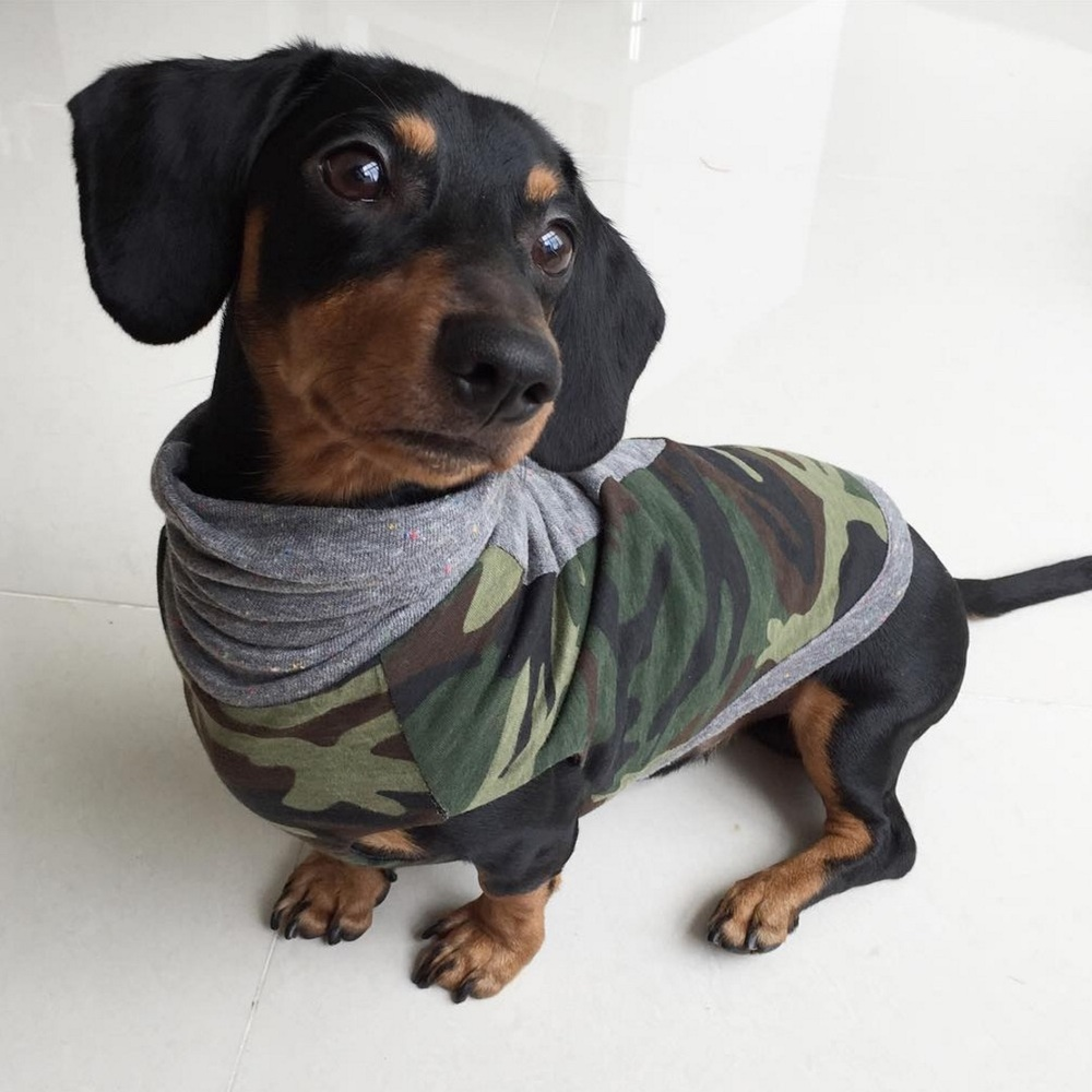 """""""My dachshund Loki's first shirt ever came from Long Dog Clothing, and it was definitely worth the wait! I live in Manila, and while there are decent dog shirts to be bought here, I found LDCC to be in a class of its own. Loki looks so dapper in his camo and denim tank top from any angle--2 top notch quality shirts for the price of one! Plus the international shipping service was pretty convenient enough. Looking forward to getting my dog more snazzy-looking shirts from Long Dog Clothing!"""" -Gina & Loki (@loki_thedachshund)"""