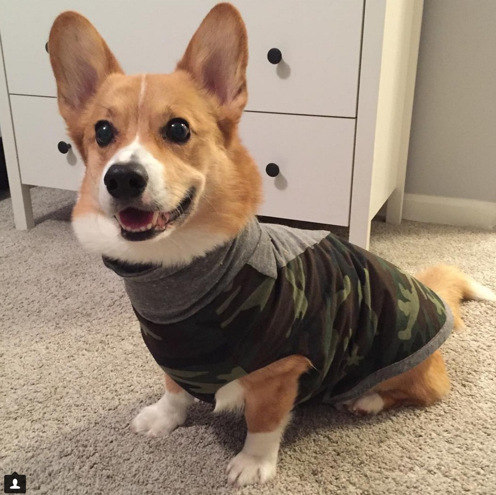 """""""He loves wearing it. The tank also washes really well (I hang it to dry). When you mentioned to me that the fit should be similar to a thundershirt I wondered if the shirt would have a similar calming effect. And it does! Fenway wears his tank at home when he seems stressed from moderate noise and when he's out playing with friends to help keep him relaxed and social. Thank you for designing something that is fashionable and calming for him!"""" -Kim & Fenway (@fenwaythecorgi)"""