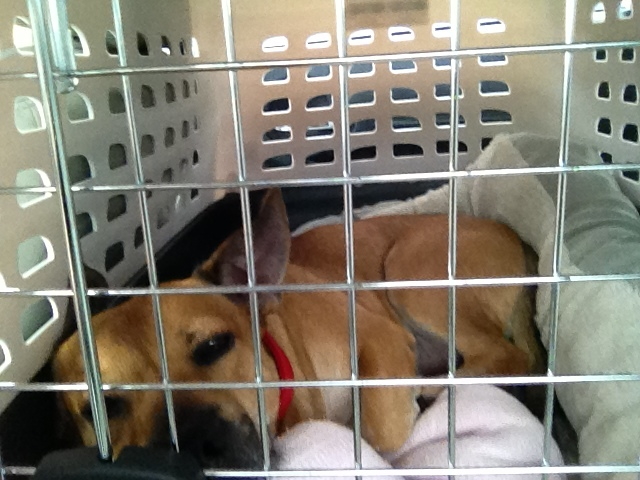 Newly rescued Theo Huxtable looks pretty comfy in his crate, no?