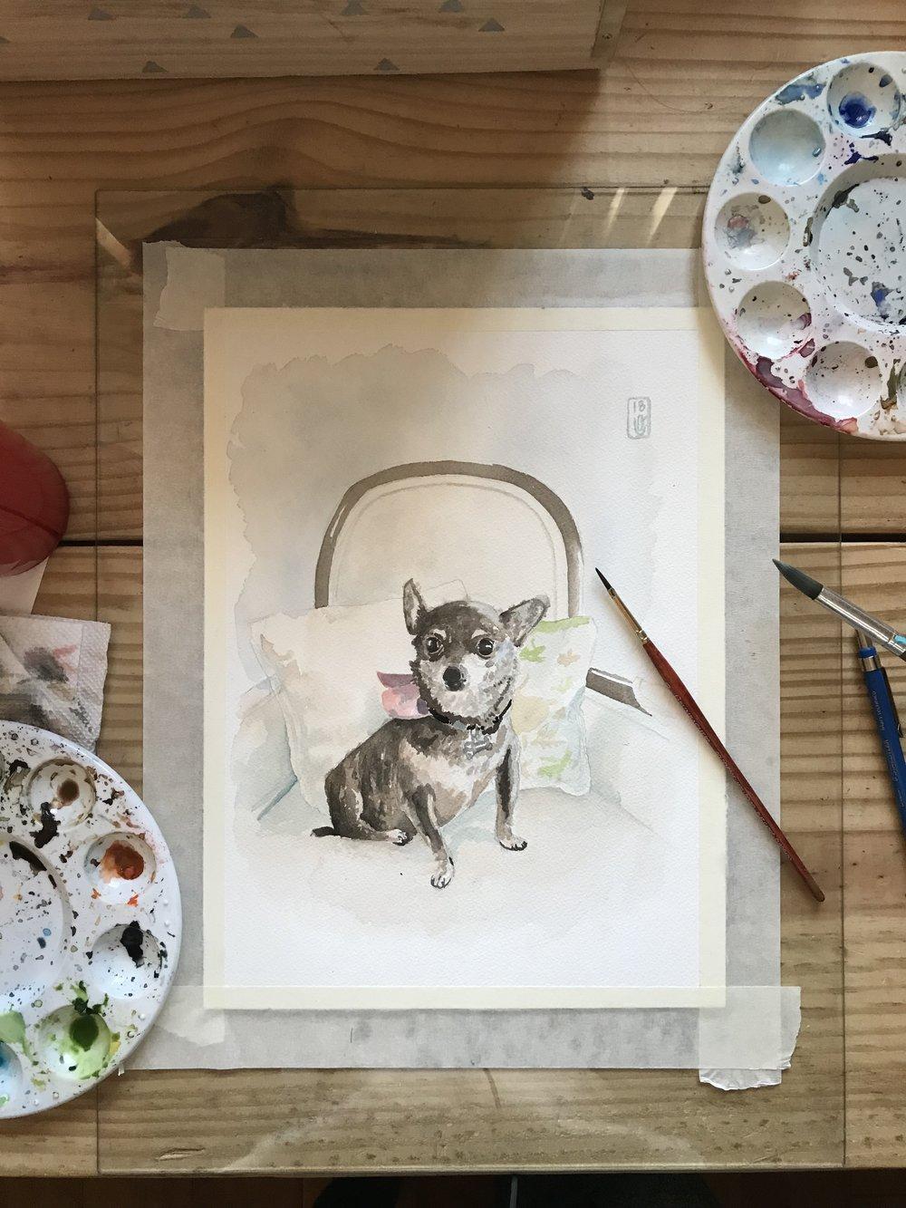 Chihuahua Pet Portrait