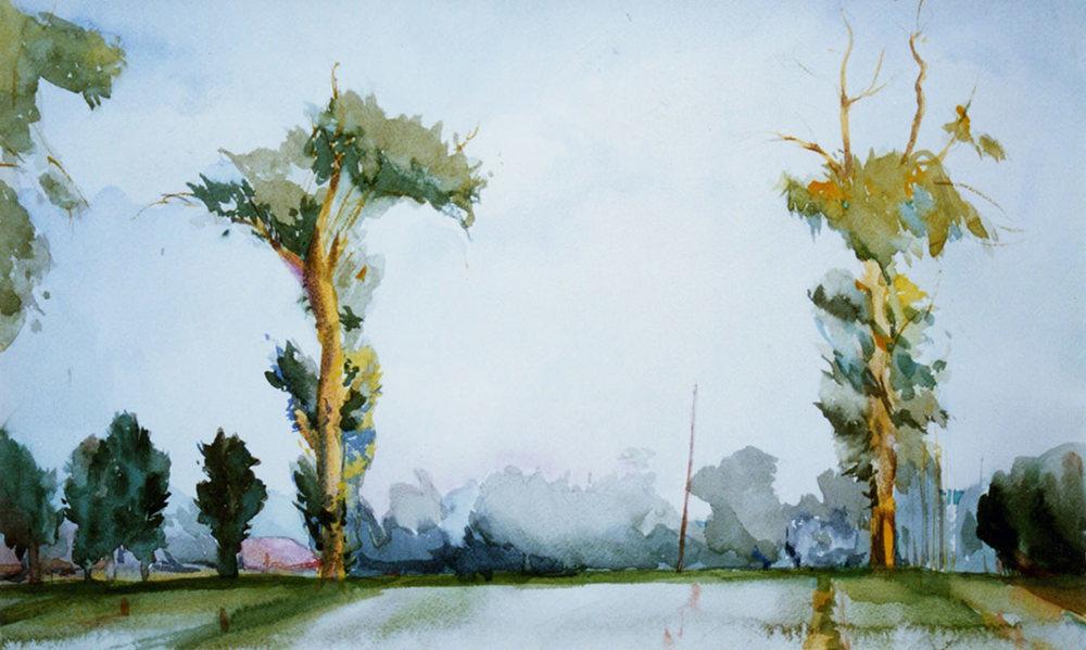 Sentinels (Eucalyptus)_1500_jm.jpg