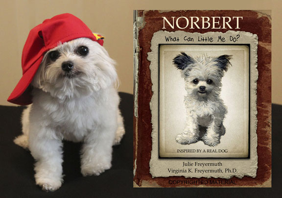 Photo of the real Norbert, 3-lb. registered therapy dog