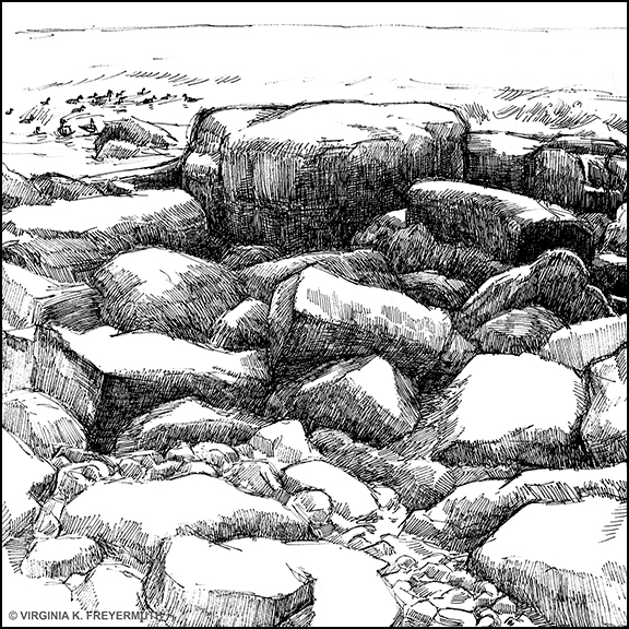 Rocky Coast ©Virginia Freyermuth, Dip Pen & Ink