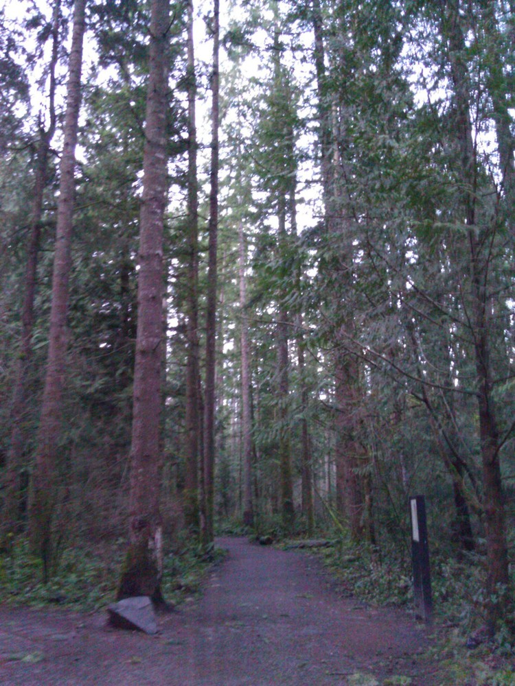 A Little Seattle Trail Running