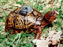8-22-08-gps_turtle