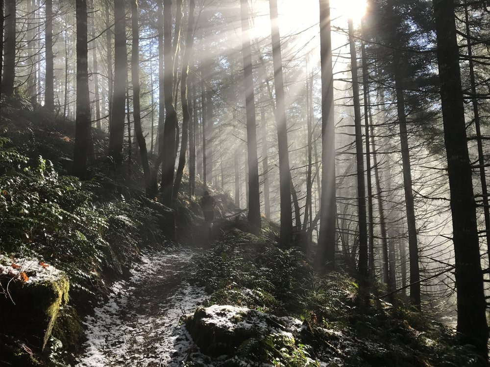 Green, sun, snow - Wilson River Trail - Tillamook