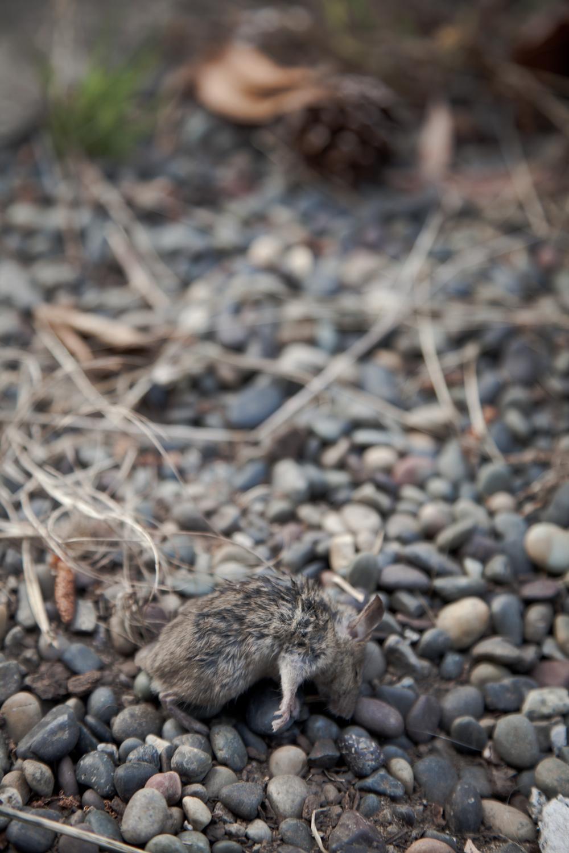 Mice-3.jpg
