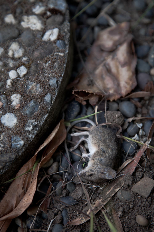 Mice-2.jpg