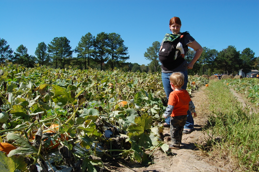 We went from playgrounds to pumpkin patches and  survived !