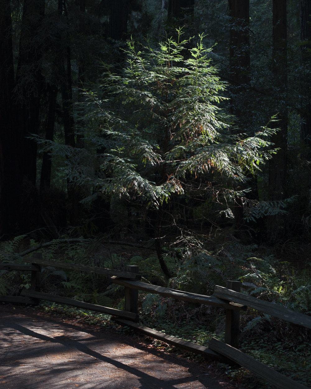 Muir Woods, 2016