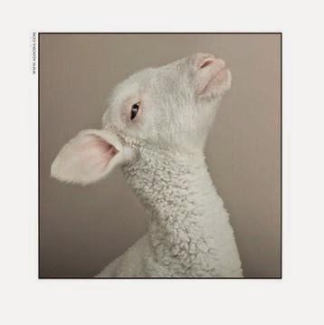 Lamb, Agnona Campaign
