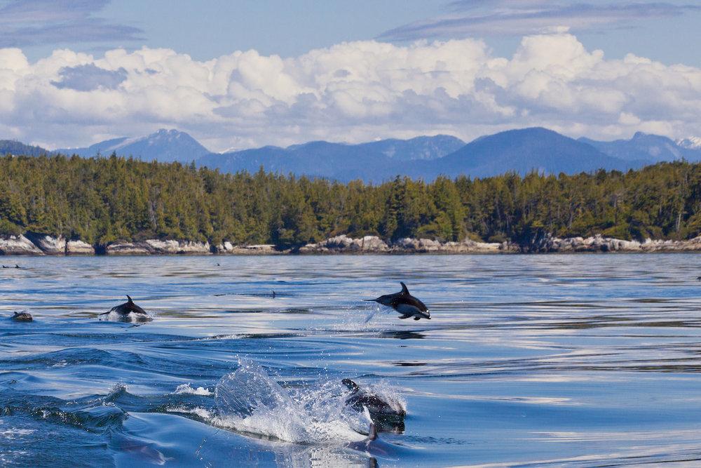 Dolphins Canada_JC.jpg