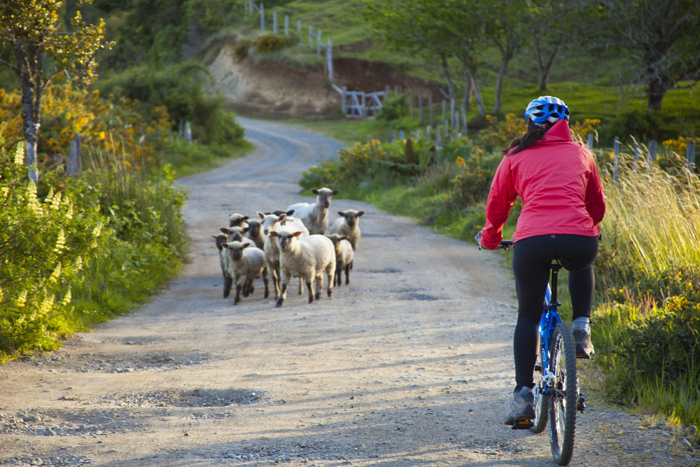 Sheepjpg.jpg