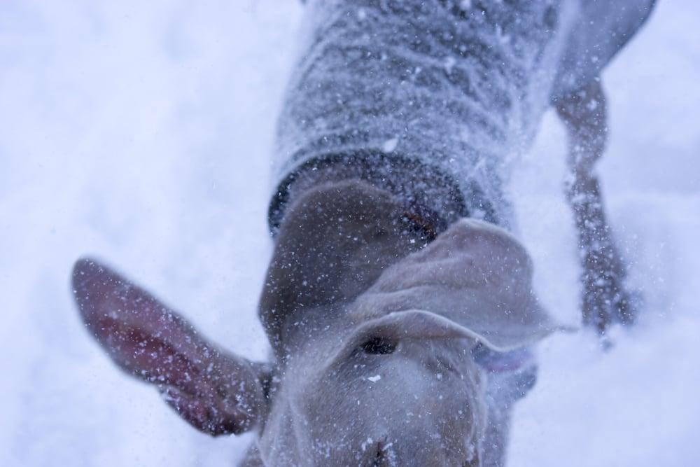 snow shark _8.JPG