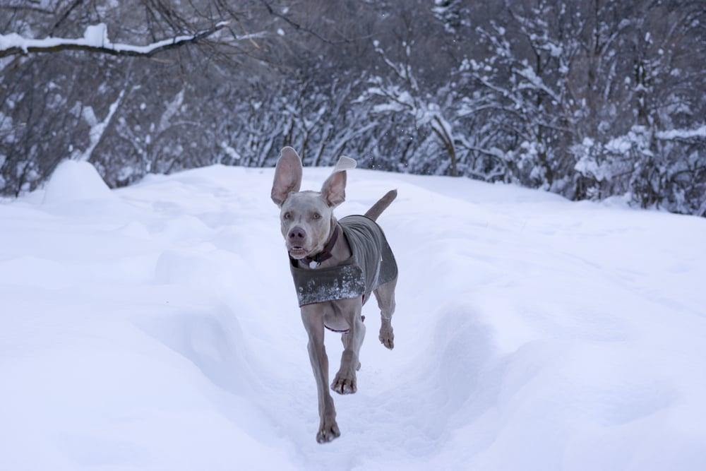 snow shark _7.JPG