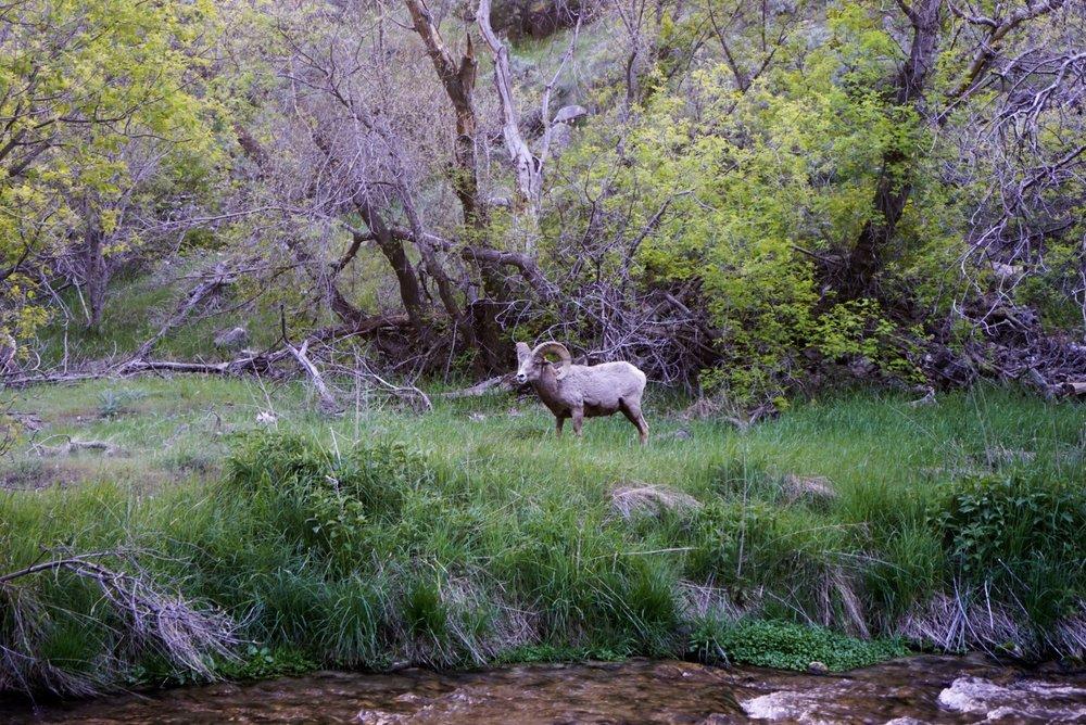 River locals