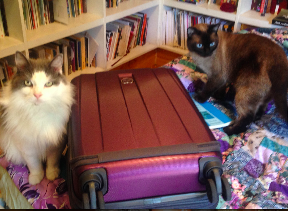 "I doubt both cats could squeeze into my 19"" carry-on. If I open it, I'm sure one of them will try. My challenge is to bring only this small suitcase for Vignettes & Verses in Ireland"
