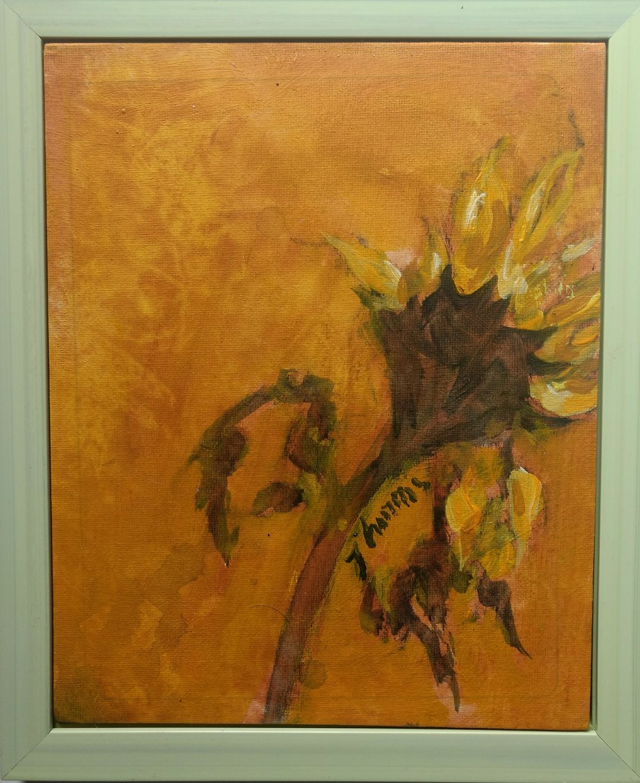 Sunflower Portrait 12