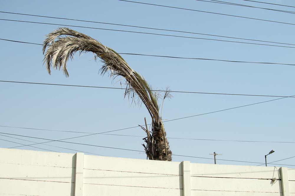 Drooping Tree, Karachi, Pakistan, 2015
