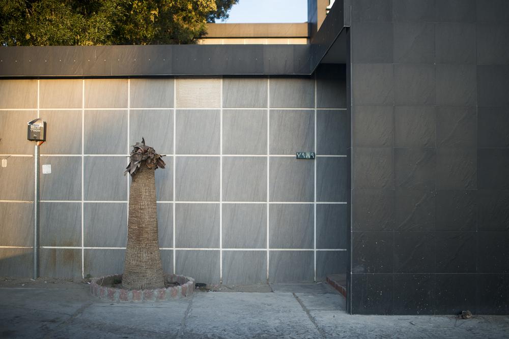 Trimmed Tree, Al-Khobar, 2015