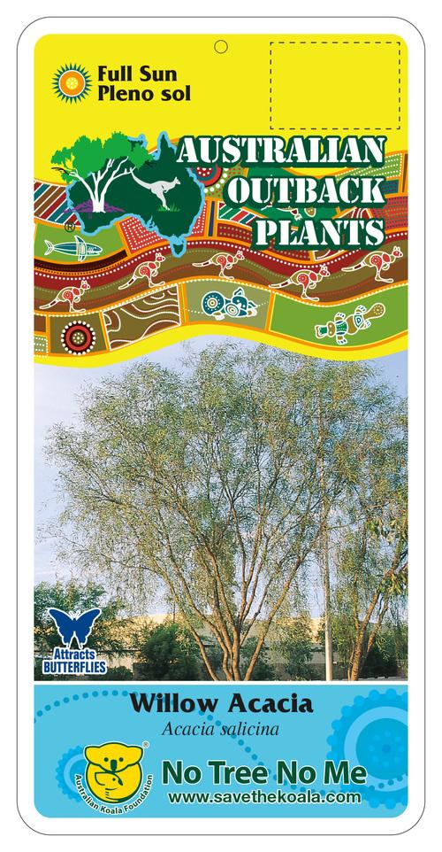 Acacia Salicina Willow Acacia Australian Outback Plants Native