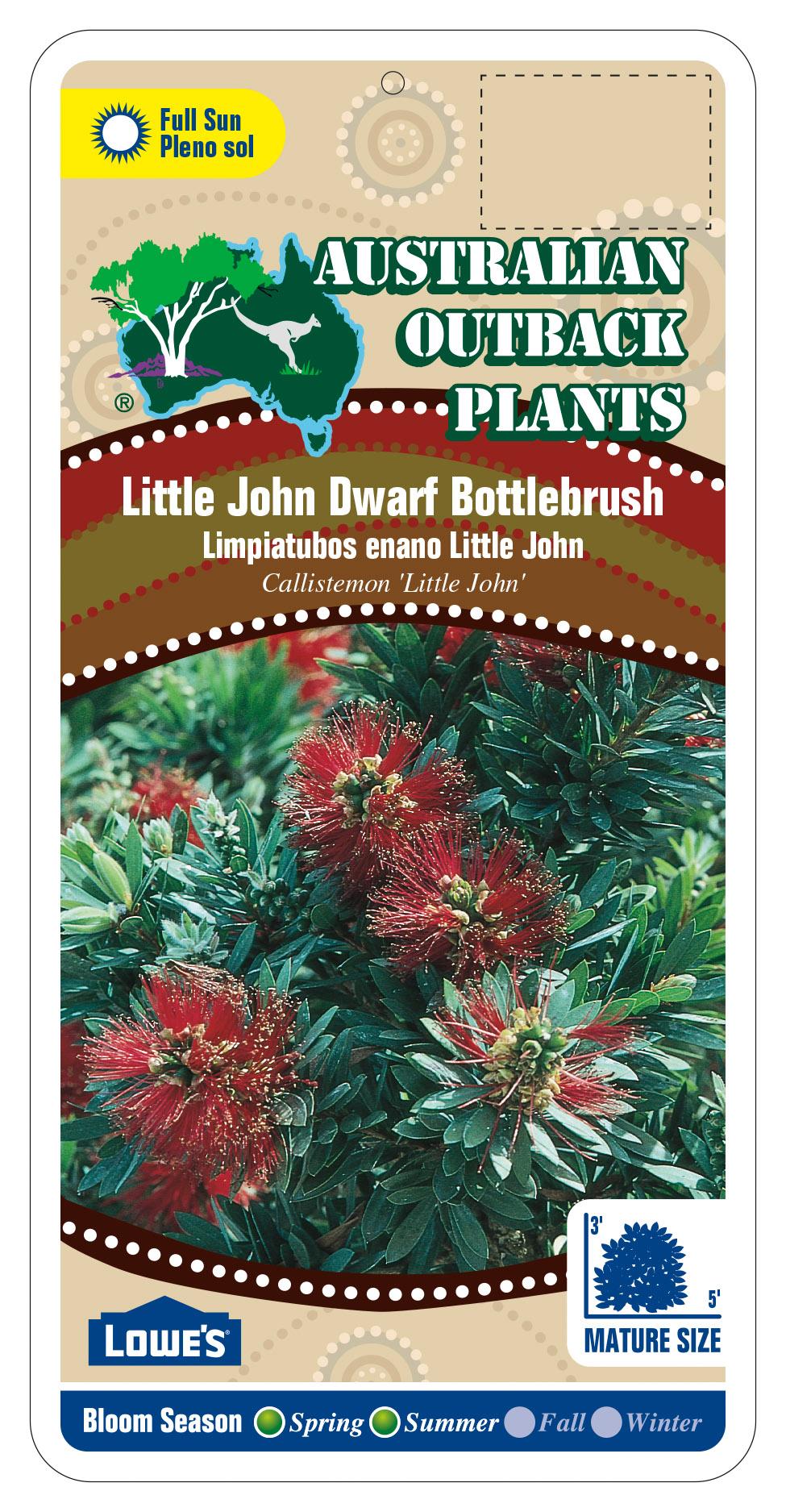 94904_FRONT-Little-John-Dwarf-Bottlebrush.jpg
