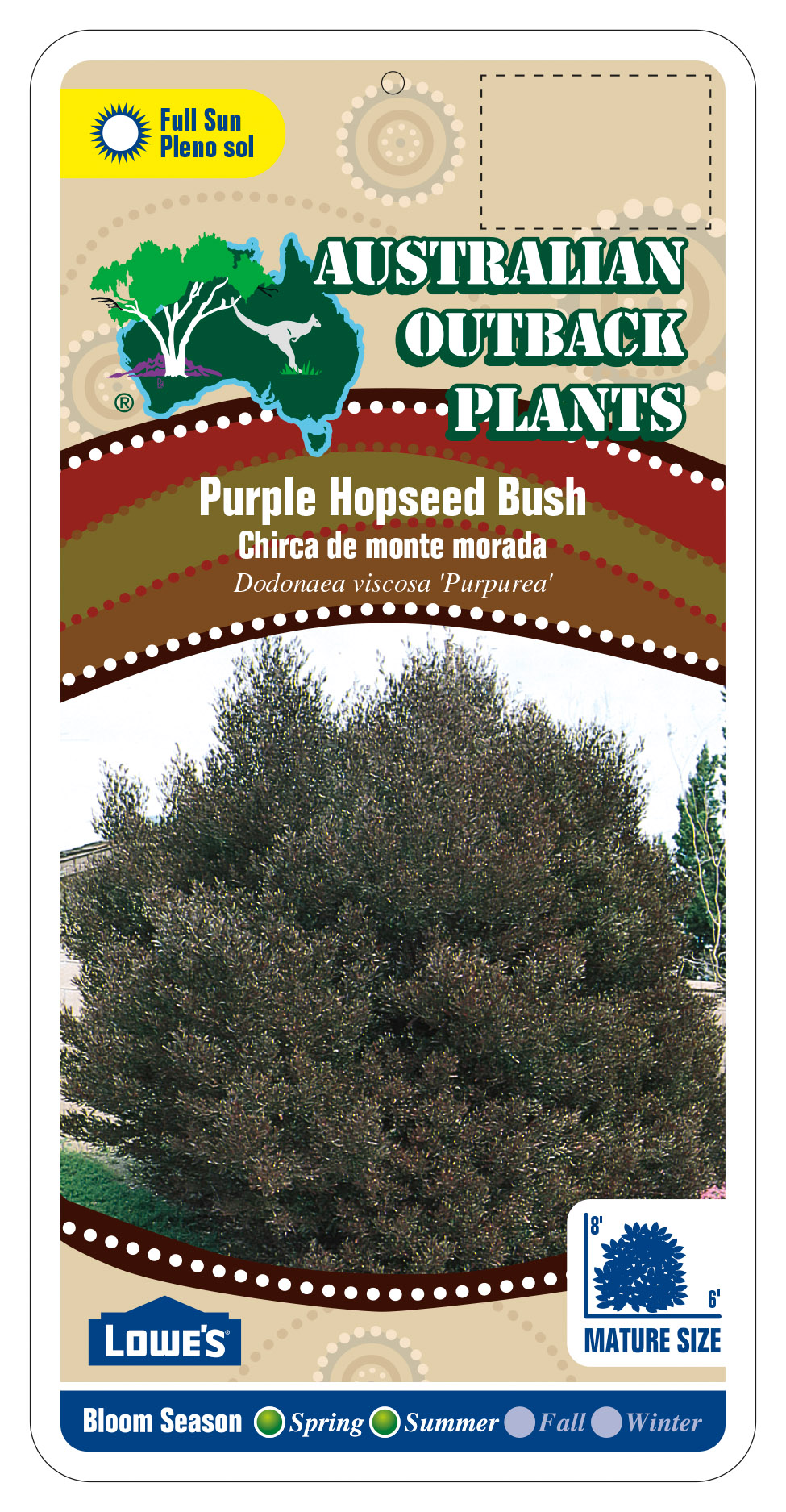 87332_FRONT-Purple-HopSeed-Bush.jpg