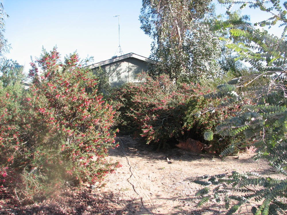 22 OB Bushfire Homestead garden.jpg