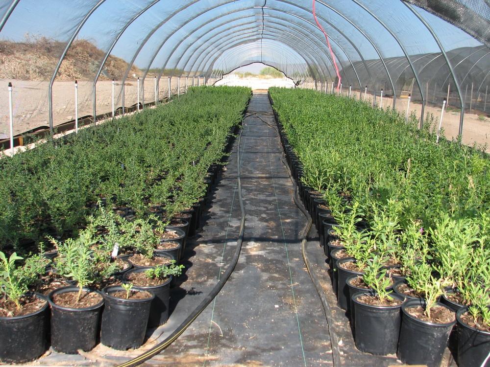 24 1 gal stock in greenhouse Easter Eggs.jpg
