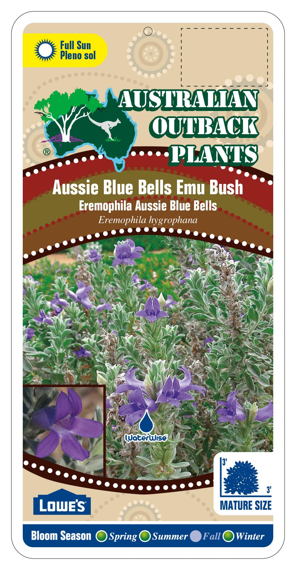392196_FRONT-Aussie-Blue-Bells-Emu-Bush.jpg