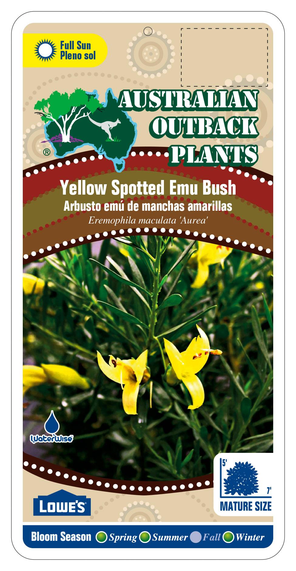 256010_FRONT-Yellow-Spotted-Emu-Bush.jpg