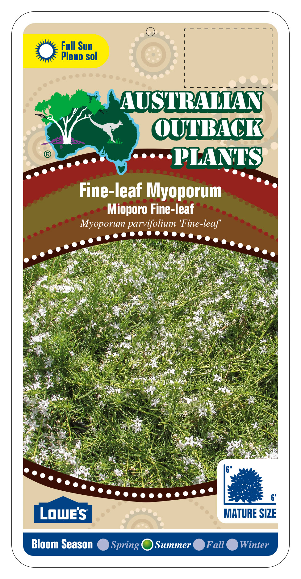 94385_FRONTFine-Leaf-Myoporum.jpg
