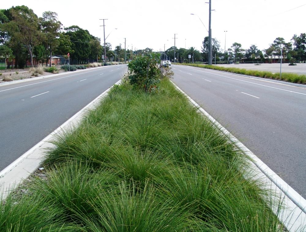 Lomandra-Breeze-hwy-planting.jpg