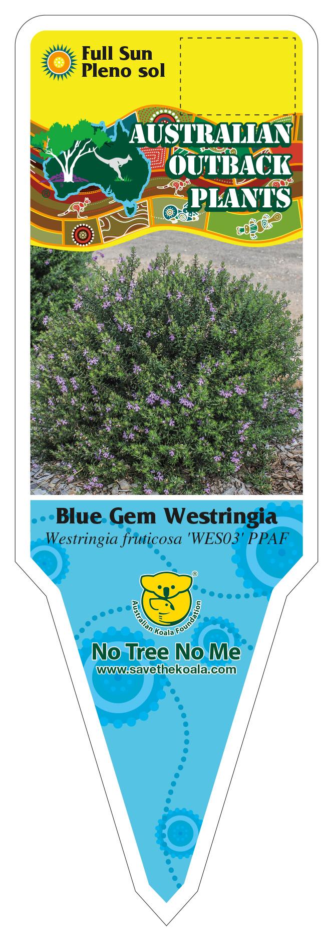 432442_FRONT-Blue-Gem-Westringa.jpg