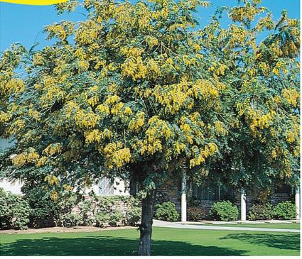 Our Plant List Australian Outback Plants Native Plant Nursery Usa