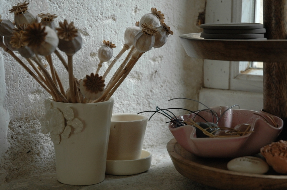 fenetre plantes.jpg