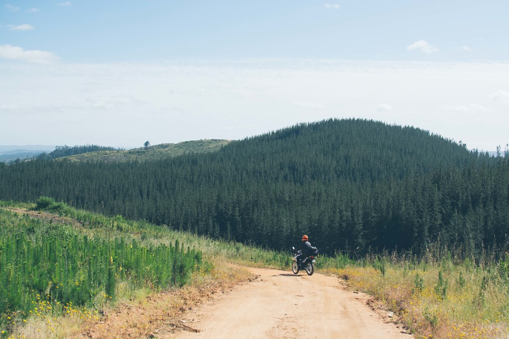 Miles of logging tracks, great offroad riding and great camping.