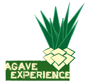 Agave experience