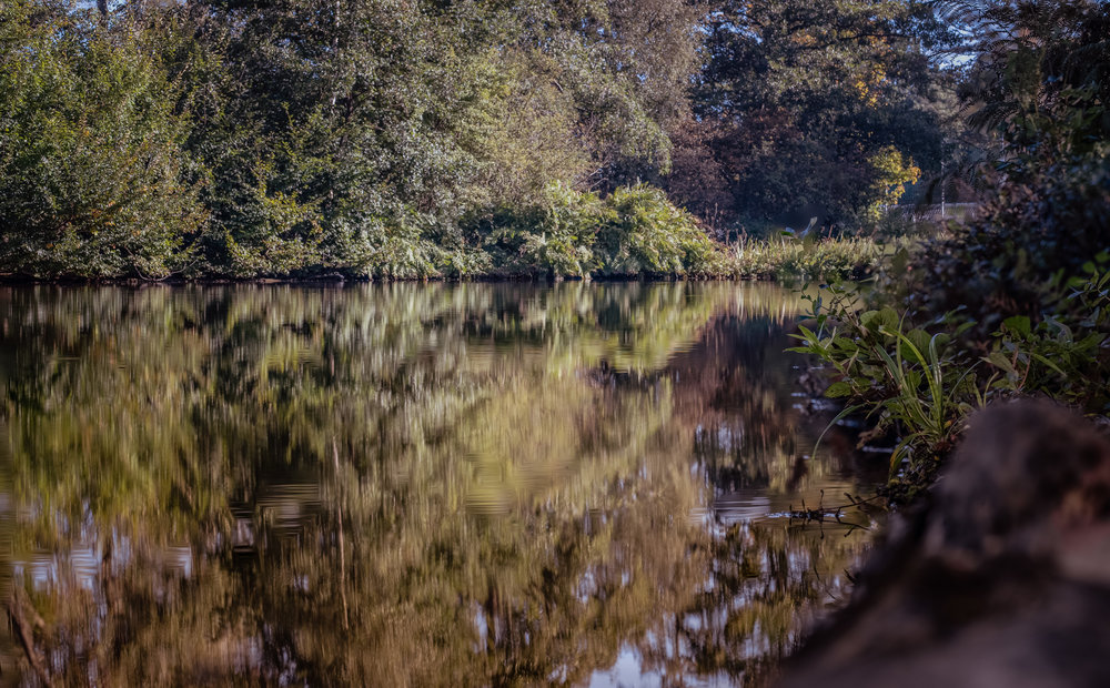 A walk in the park - Green refelections-2.jpg