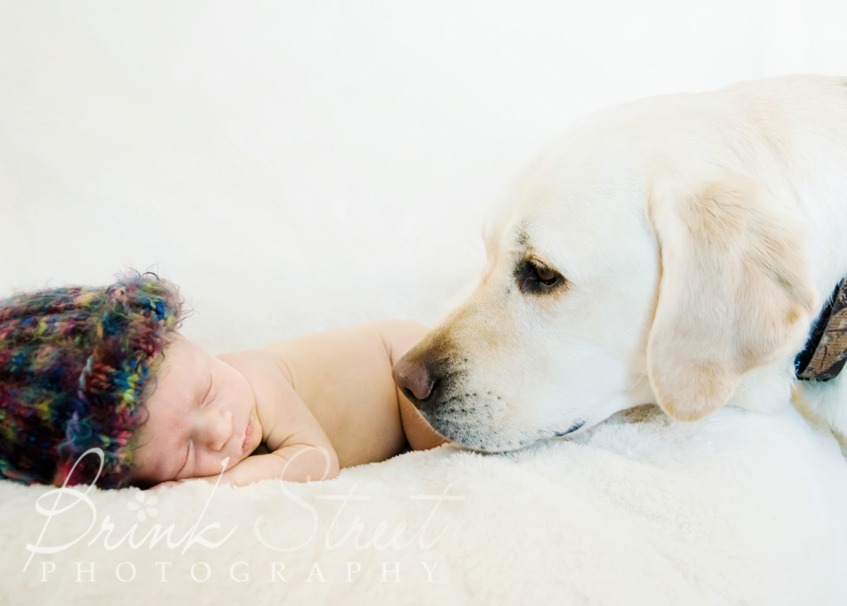 Evergreen Newborn Baby Photographer